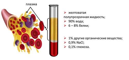 Плазмолифтинг в Киеве - Wellness Studio Pastura 2